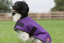 Dog coats / Range of waterproof dog coats from Ginger Ted UK