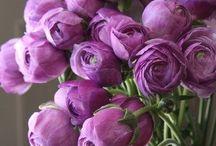 Purple ♡ / La couleur violette, qui me rappelle ... ♡