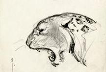 Desenho (Animals)