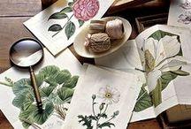 Botanical & Zooligical illustration