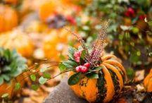 Évszakok, hangulatok / seasons natural beauty