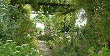 planter / Dans ce tableau je cherche des idées pour réussir le jardin parfait.