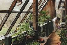 Greenhouse & Plants / Future green garden dream and ideas