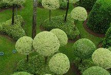 Miniature gardens / Miniature gardens