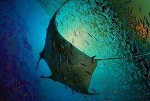 Deep Sea & River Fish / Monster, Mysterious Fish