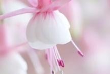 flowers / by Lida van der Steen