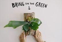 Apartment Gardening / by Anne Barton-Veenkant