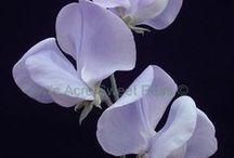 Flowers for silk / Inspiration for bridal flower making