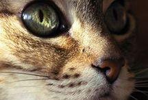 Kitties ♥
