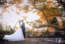 wedding photography / wedding photography