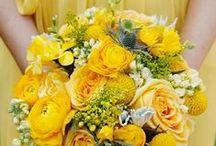 My Yellow Wedding / Yellow, sunflowers and lemons.