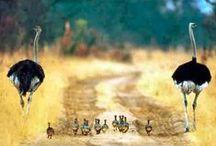Loving animals <3