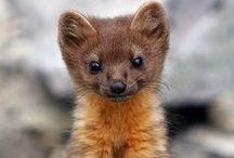 Aranyos állatok / Cute animals