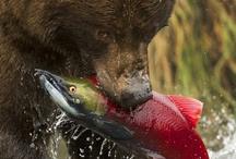 Wonderful wildlife, animals