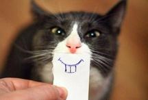 Cats! Purrr purrr