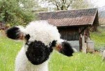 Farms and farm cuties