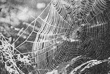 Spider webs and spiders / The great architects.