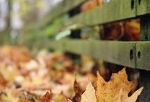 Autumn-Autunno-Осень-Otoño / everything that concerns Autumn