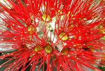 New Zealand native plants / A collection of New Zealand native plants, including both endemic species that are found in New Zealand only, as well as plants that naturally occur in New Zealand and other countries. You can find detailed information about each pinned plant in the plant guide of my website http://www.aboutgardendesign.com (= http://www.sceneoutside.co.nz).