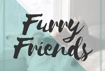 Furry Friends / Cats and dogs or other furry friends