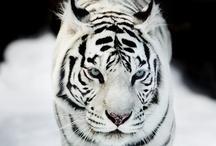Photography ~ Wildlife