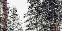 [MB] FROST. / winter mood board