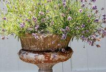 Garden  / by Debbie Brothwood