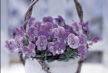♥ Lavender-Lilac and Purple Color ♥ / by Virginia