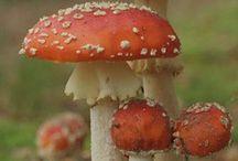 Mushrooms / Plants