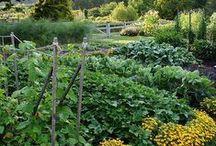 Garden and crop