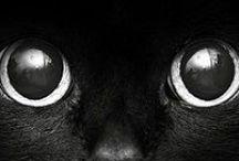 Suprrrsticious - Black Cats / All Black Cats... Not so unlucky... Cat art, cat fashion, cat photography, everything black cat. #blackcat #cat #pussycat #cat