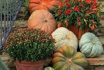 Decorating With Pumpkins / Using all sizes, colours and types of pumpkins, squash and gourds to add to your indoor and outdoor home decor.