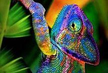 Animaux du monde / Les animaux sauvages, étranges, surprenants, majestueux, magnifiques à découvrir et à admirer sans modération
