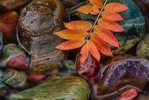 Fall / by jen belyea