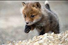 Cute Animals / by jen belyea
