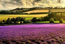 French Dreams / by jen belyea