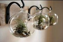 Indoor Gardening / by jen belyea