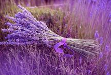 Lavendel / Everything with lavendel
