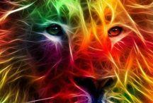 Rainbow / Nature, colour ect