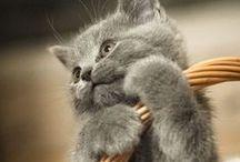 Chats / Différentes photos de chats