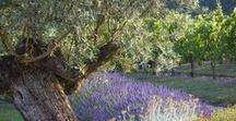 Vie en Provence