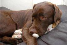 CUTE PETs ☺️☺️☺️ / Most adorable PETs