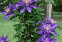 Planten en Bloemen (Flowers and plants)