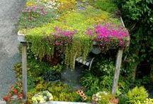 Planten, bloemen, kruiden, buitenleven