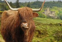 All things Scottish / Wildlife, Countryside, Fashion,People, Places that relate to Bonnie Scotland. / by Ian