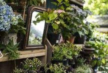 Jolis jardins et extérieurs