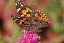 butterflies / by Jo Coulter