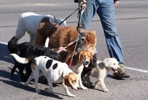 """On ONE end of a Leash ...  / This board started as """"Dogs with People on Leashes"""" and then morphed to """"DOGS on ONE end of the leash!"""" and now is ... well ... you'll see! / by Elizabeth Severino"""