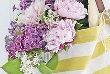 ✿ FLOWERS ✿ / Colorful flowers :)