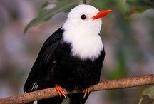 Beautiful birds / birds